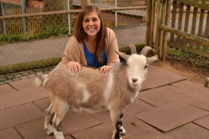Playful and friendly goats in the Storybook Park