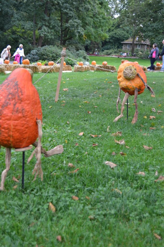 Pumpkin Soccer
