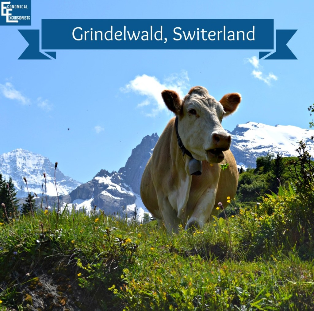 Grindelwald, Switerland: Can't get much closer to nature than that!