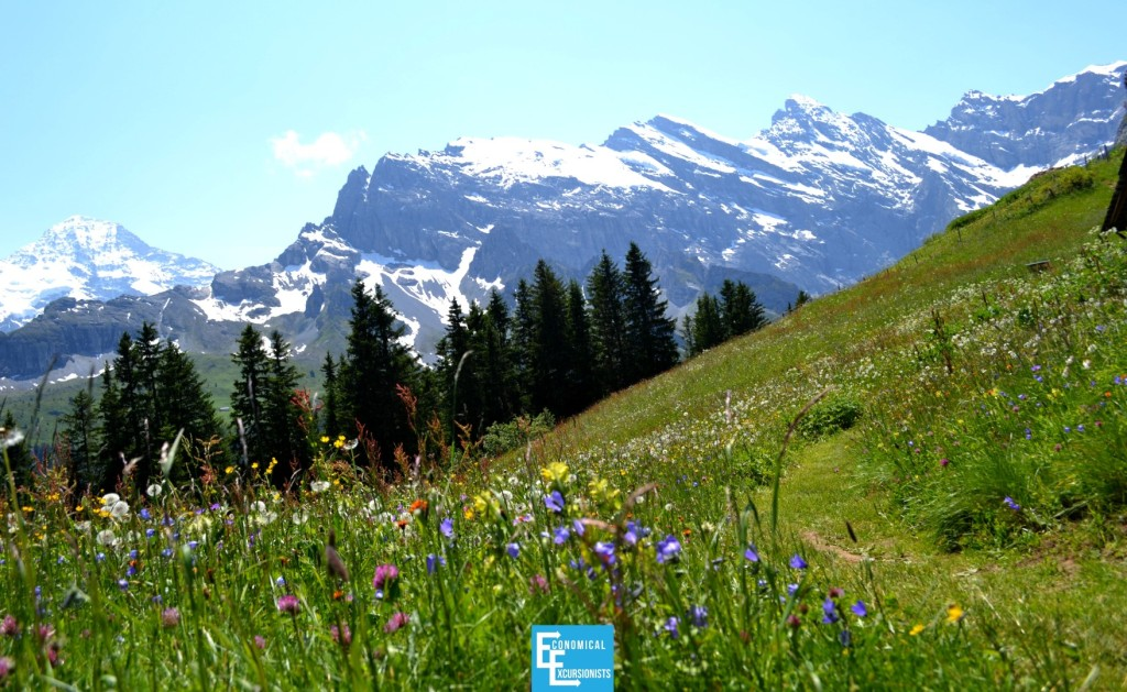 Grindelwald Alps Wildflowers ; This is real life!? How beautiful!