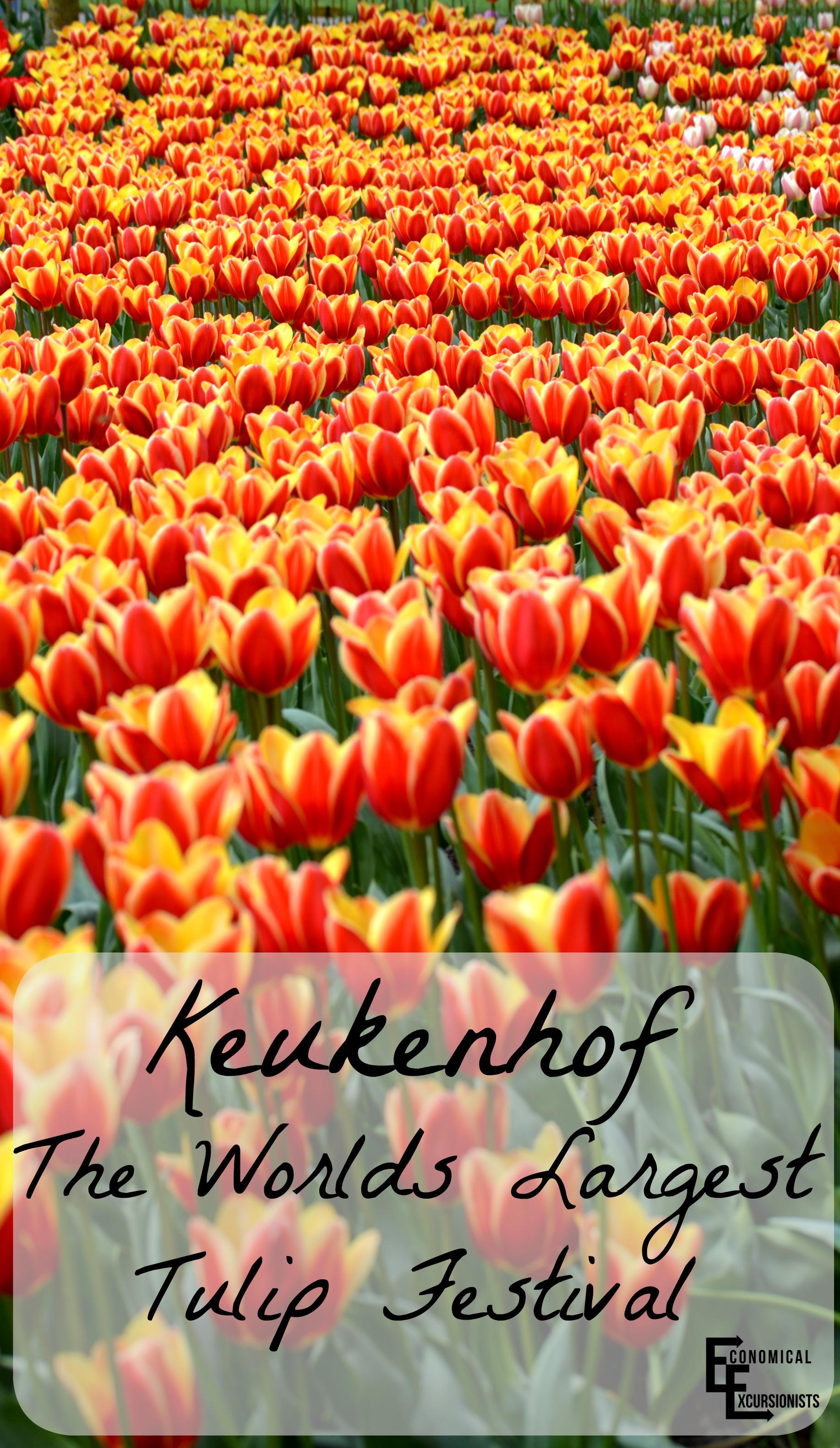 keukenhof tulip festival. Black Bedroom Furniture Sets. Home Design Ideas