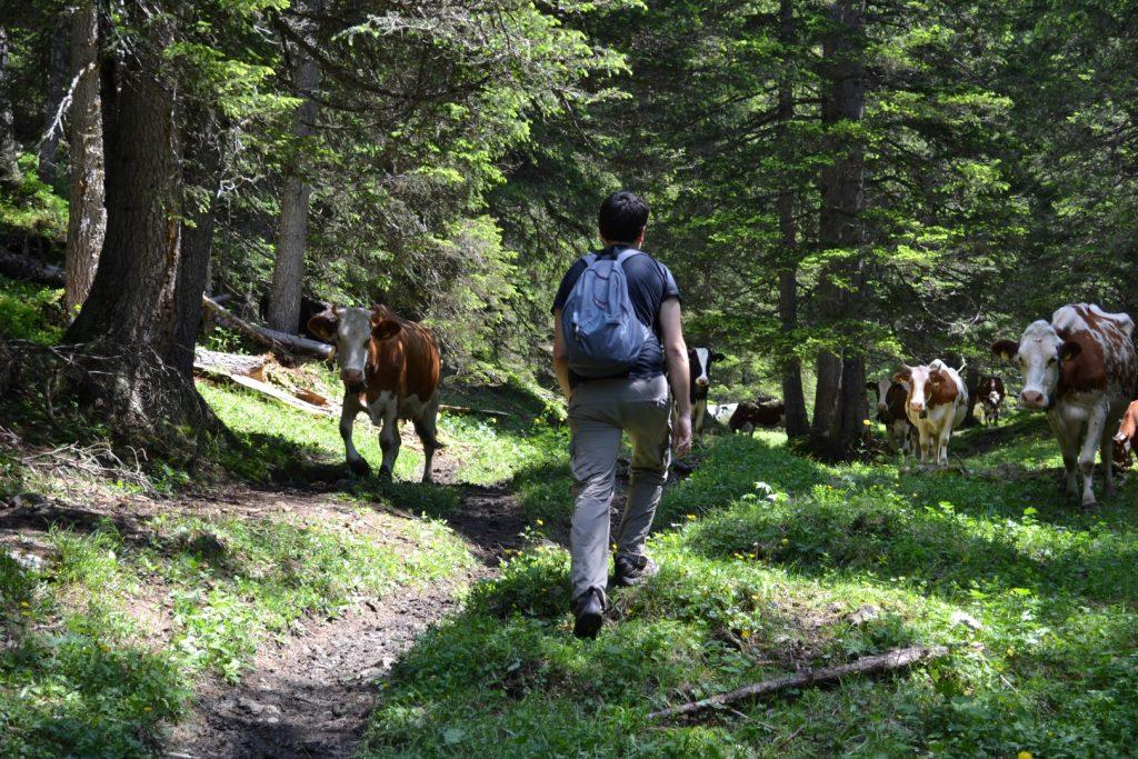 grindelwald hiking